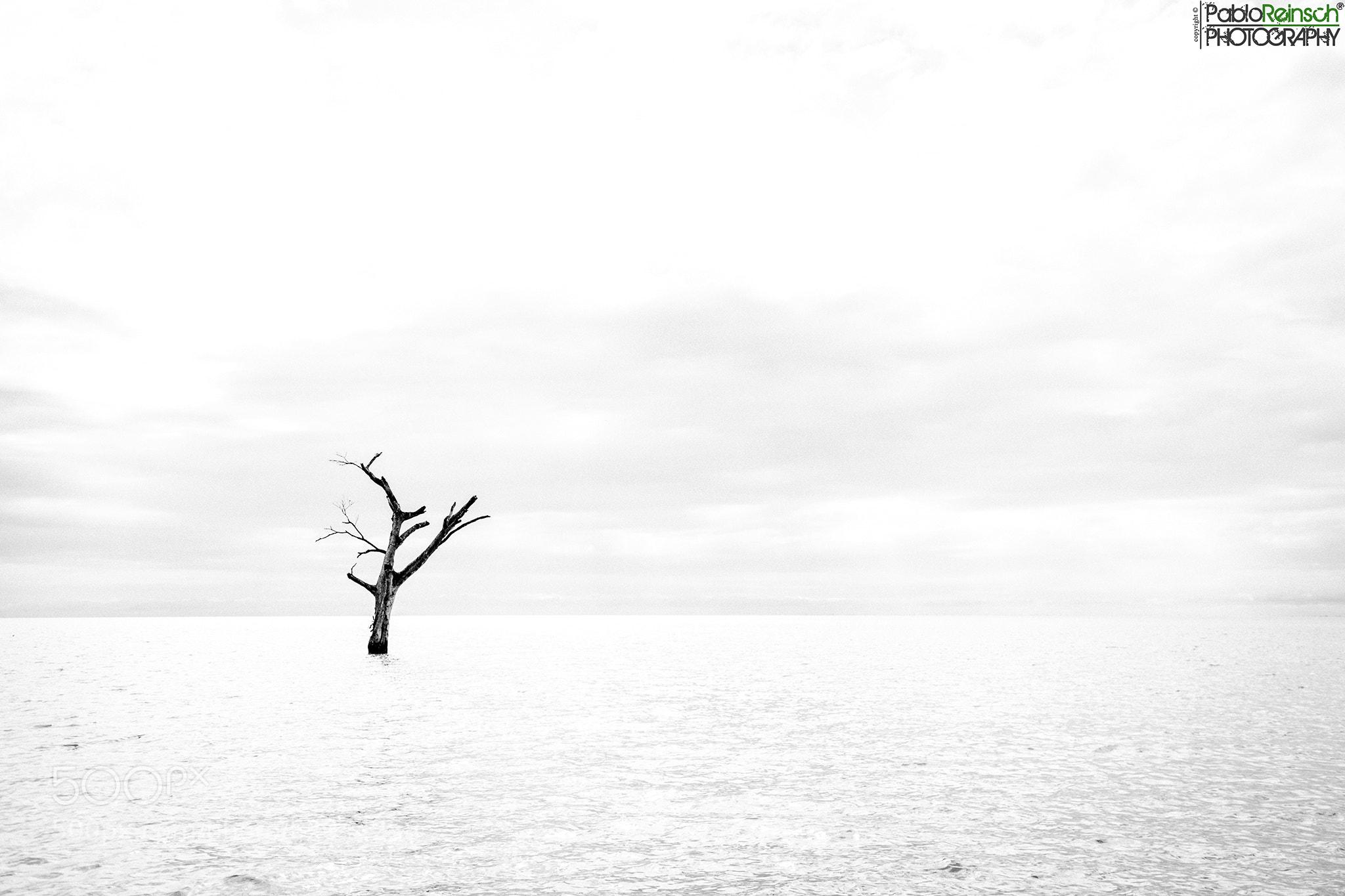 Photograph Soledad.- by Pablo Reinsch on 500px