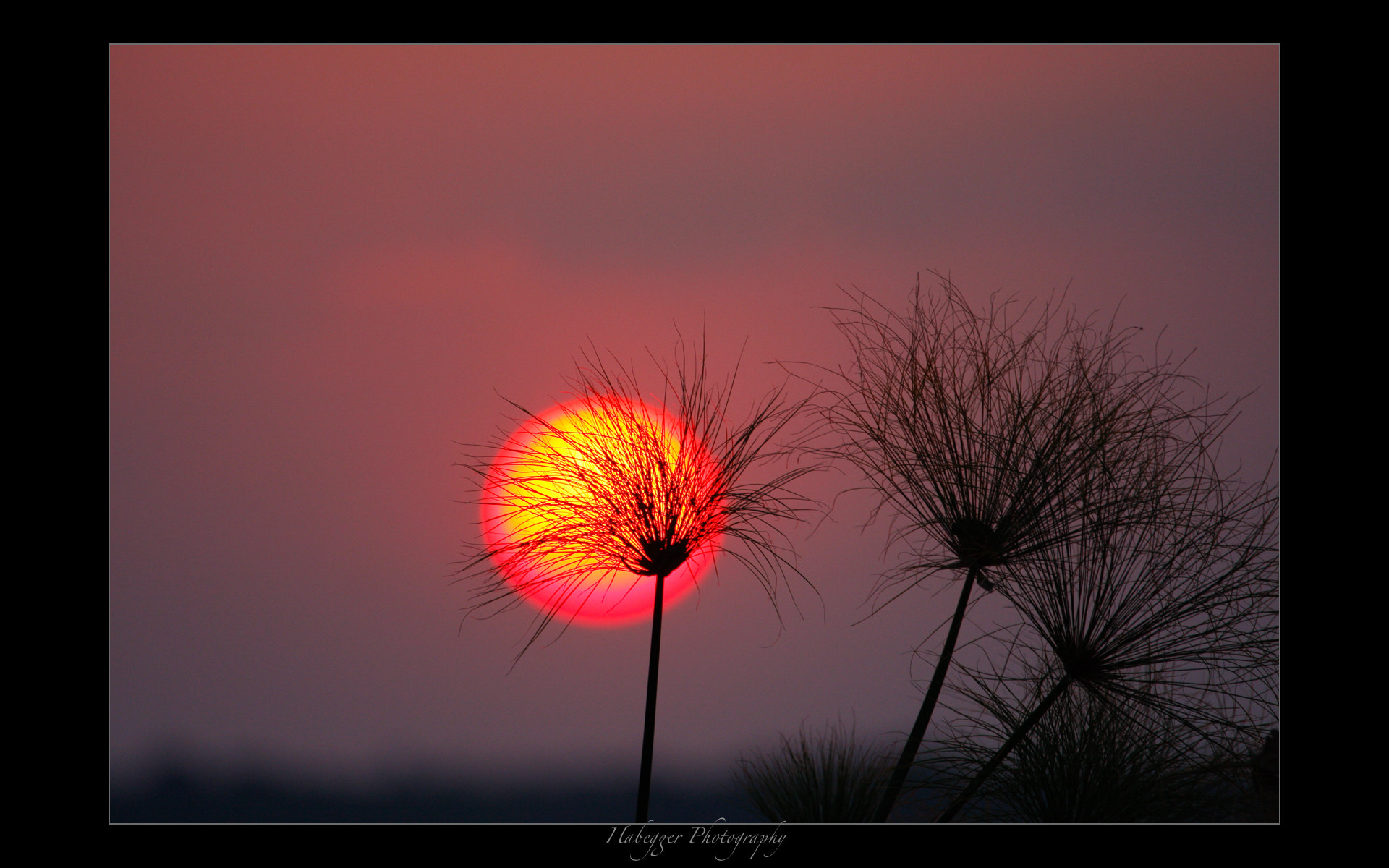 Photograph burning reed by Chris Habegger on 500px