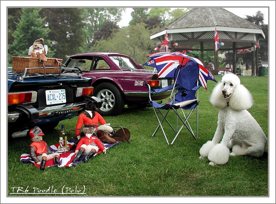 Triumph TR6 Poodle