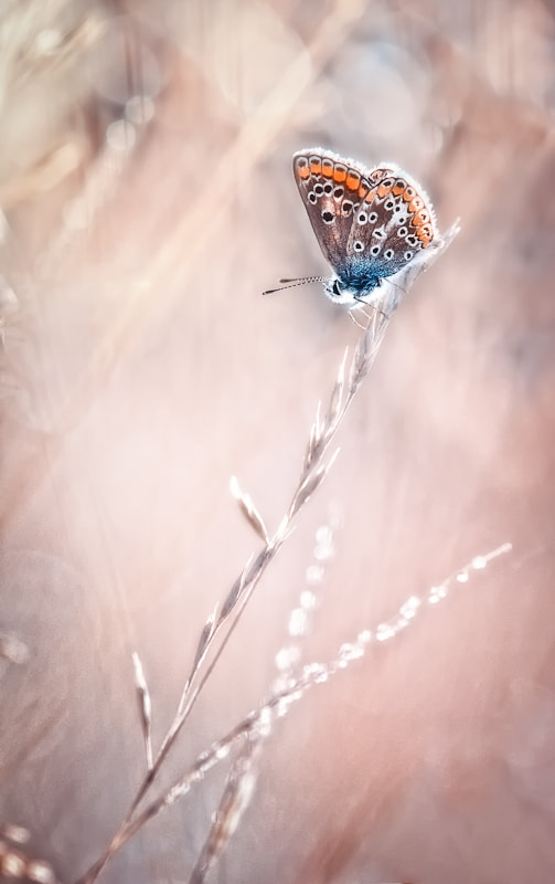 Photograph The love story of the lonely butterfly * by BLOAS Meven on 500px