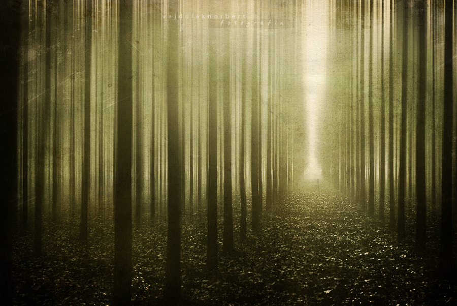 Photograph Psychedelic by Norbert Vajdulák on 500px