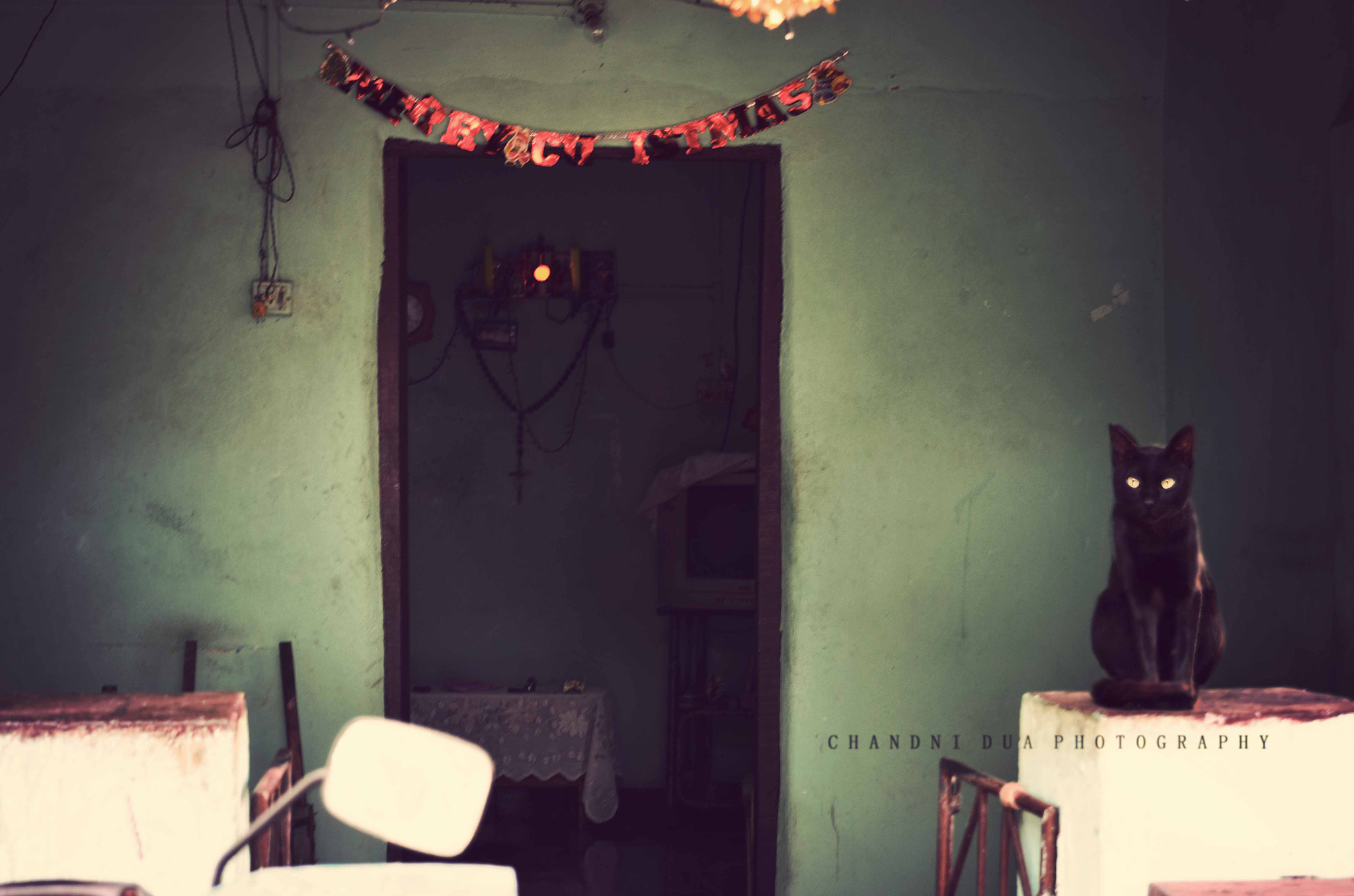 Photograph vintage_purrfect by Chandni Dua on 500px