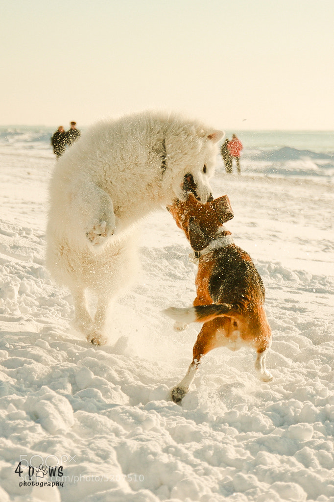 Photograph Fight by 4pawsphoto on 500px