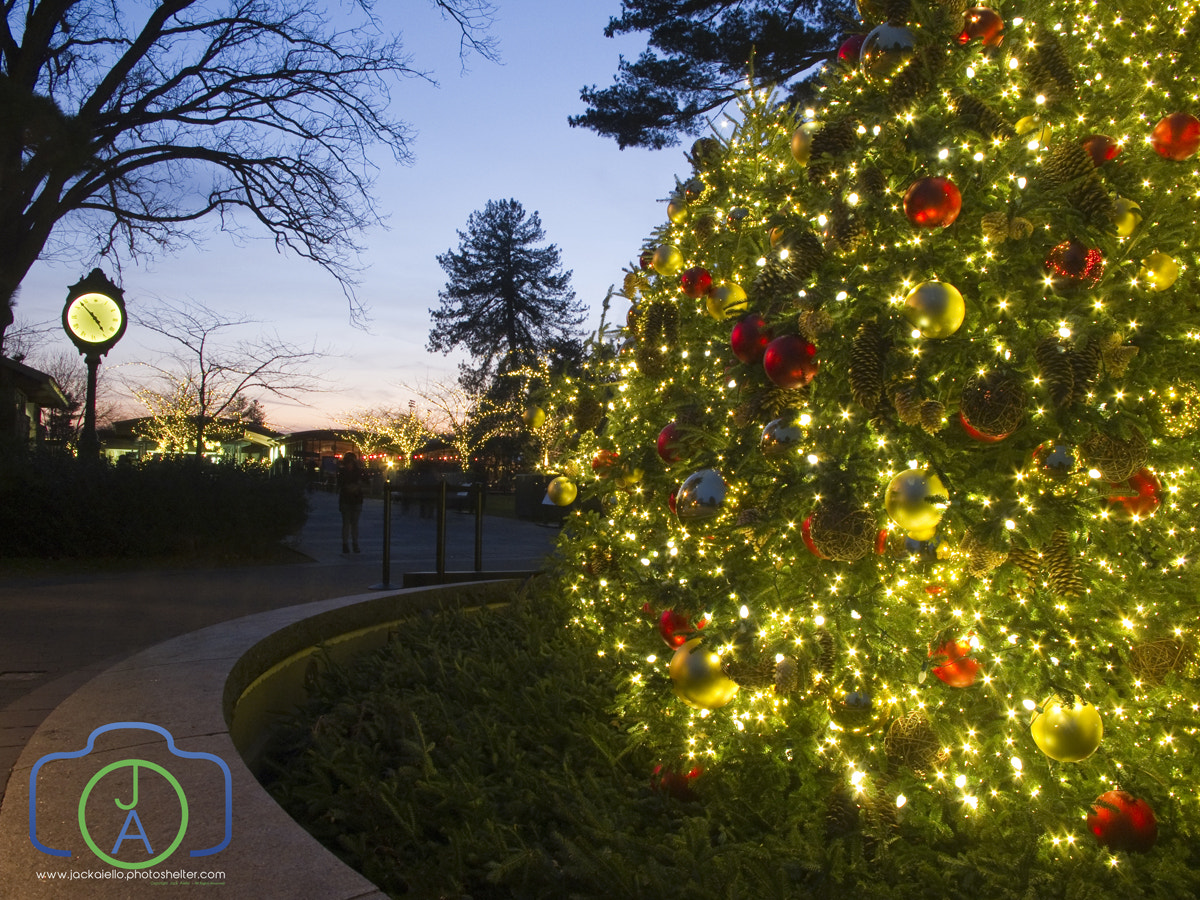 Photograph Outdoor Christmas Tree by Jack L. Aiello on 500px