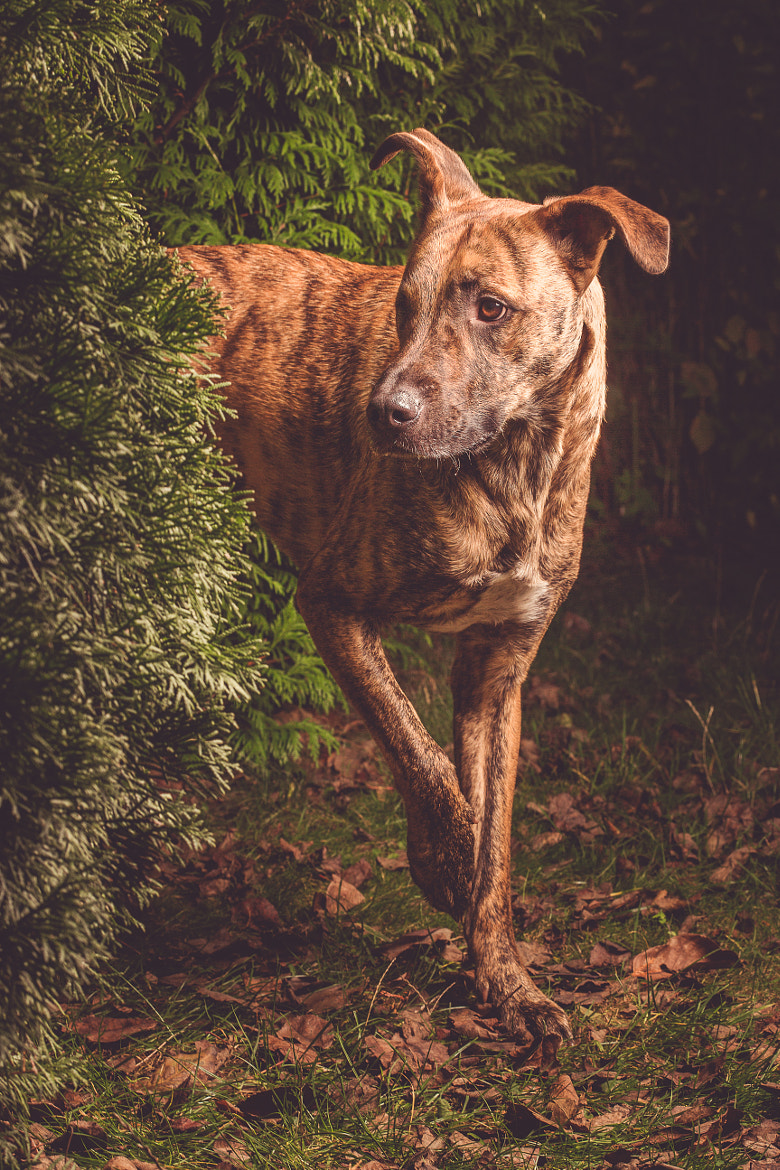 Photograph Deep in the woods by Elke Vogelsang on 500px