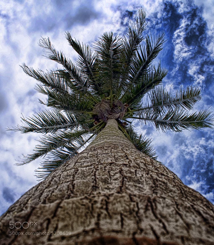 Photograph From bottom - Coconut Tree by Zulkifli Yusof on 500px