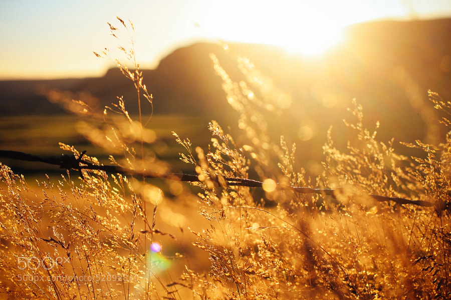 Photograph Golden Hour by trynidada on 500px