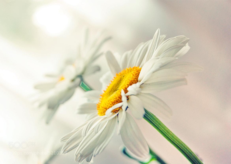 Photograph White ... by Ekaterina Elizarova on 500px