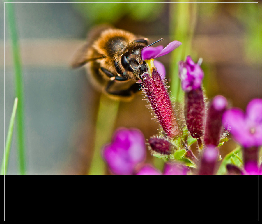 Photograph Bee by Mercè Gost on 500px