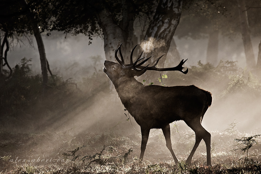 Photograph Call of the Wild by alex saberi on 500px