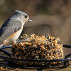 A tufted titmouse on our feeder.  These little guys have so much personality.  To much fun to watch them hope around.  No fear.  At times they jumped right up on my camera too.  :)