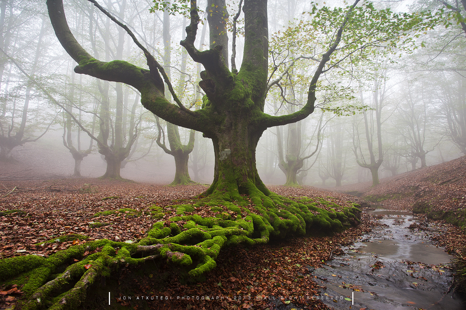 Photograph the mystic tree by Jontake . . on 500px