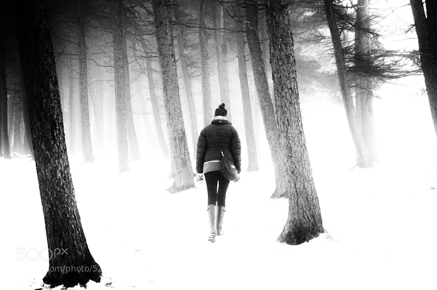 Photograph Forests and snow by t p on 500px