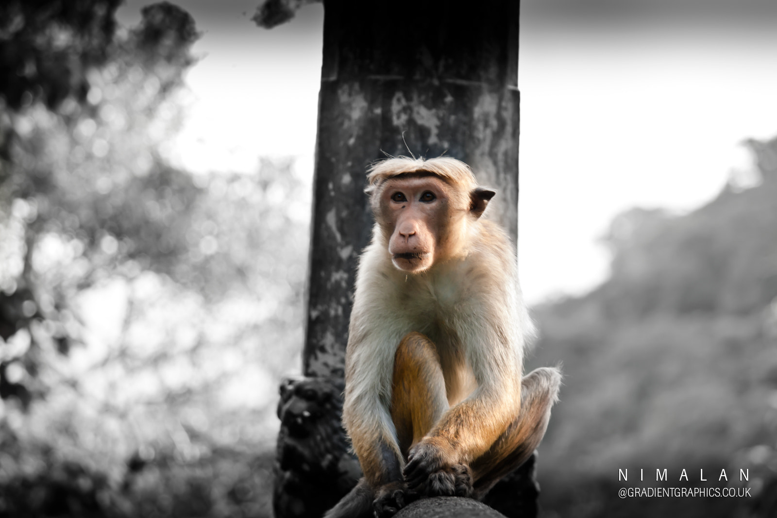 Photograph Monkey  by Nimalan Tharmalingam on 500px