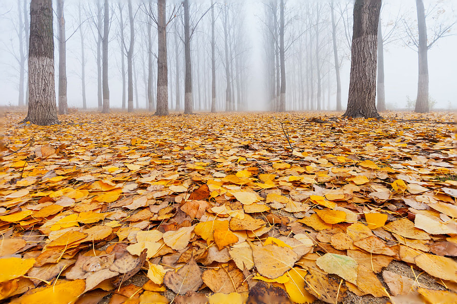 Yellow Carpet by Evgeni Dinev on 500px.com