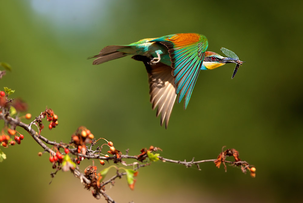 Photograph Colors by Stefano Ronchi on 500px