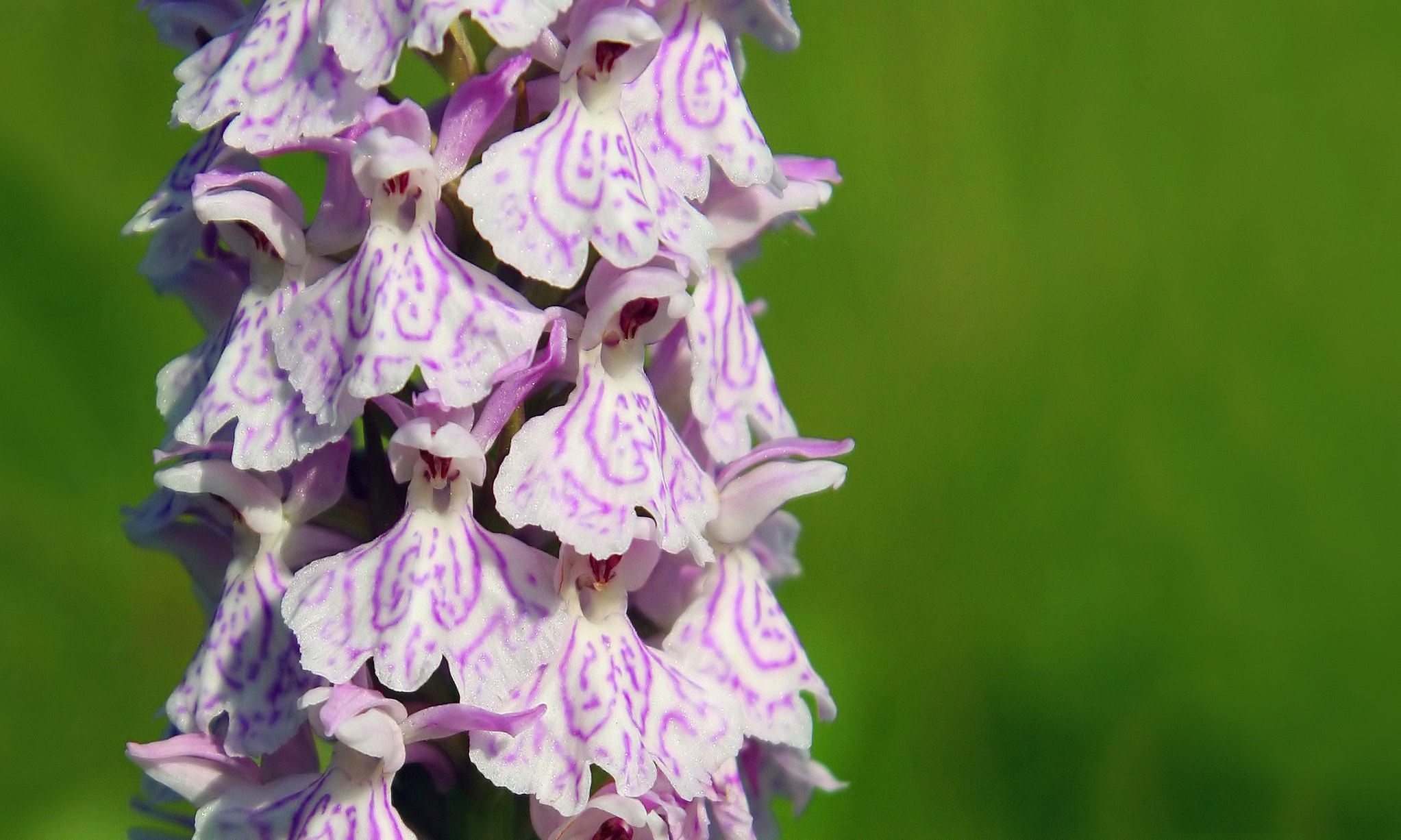 Photograph Heath Spotted Orchid by Marc Bulte on 500px