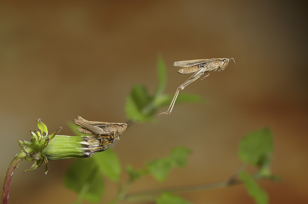 Photograph Medow Grasshopper by Dale Sutton on 500px