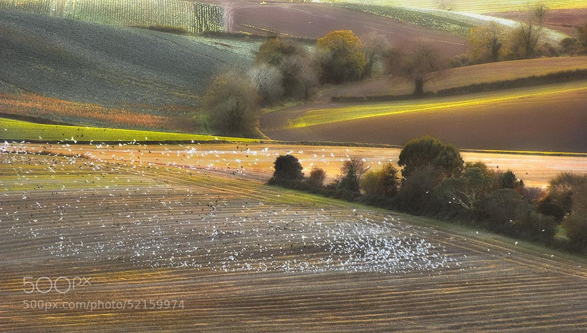Photograph Birds and fields by Lukasz Maksymiuk on 500px
