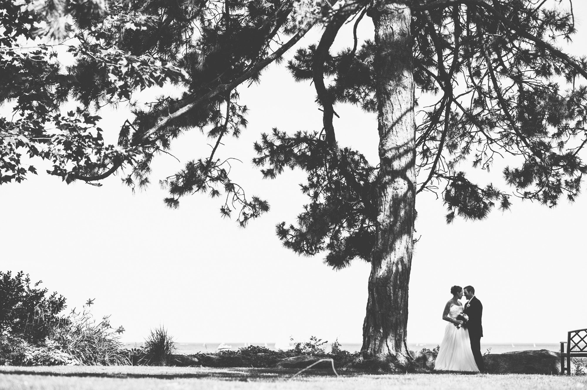 Photograph Under the Tree - BW by Mark Shannon on 500px