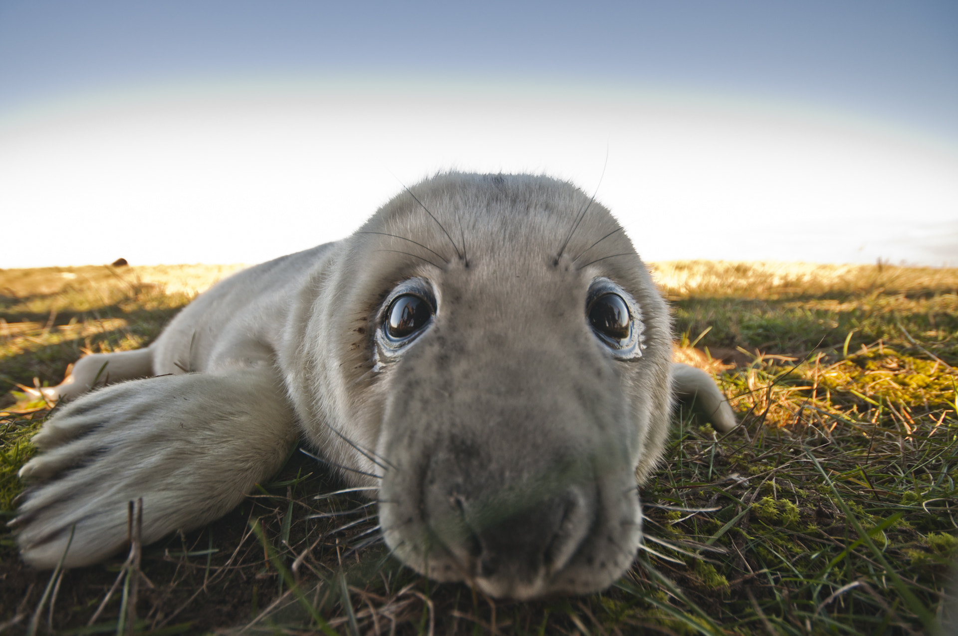 Photograph Common Seal Pup by Luke Millward on 500px