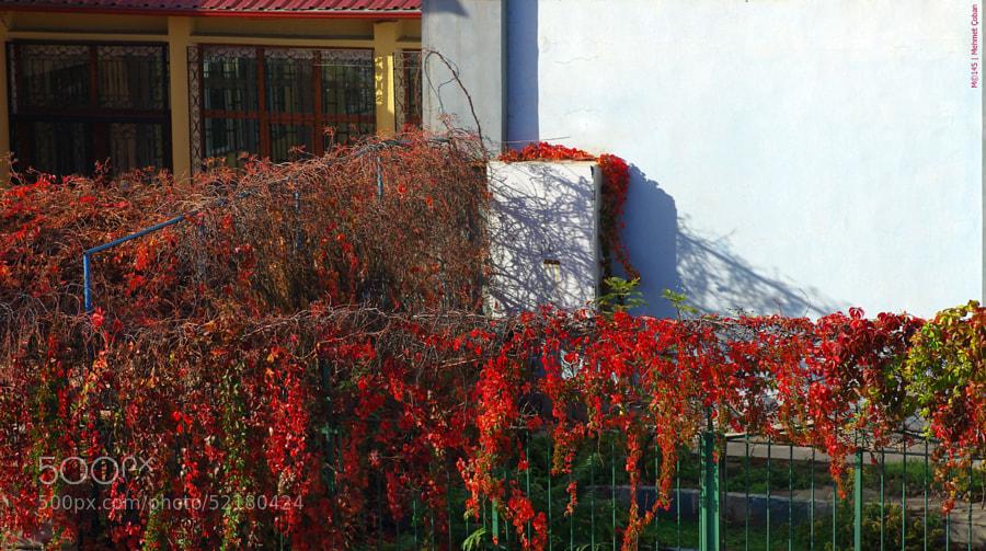 "Beautiful fall color by Mehmet Çoban on 500px.com"" border=""0"" style=""margin: 0 0 5px 0;"