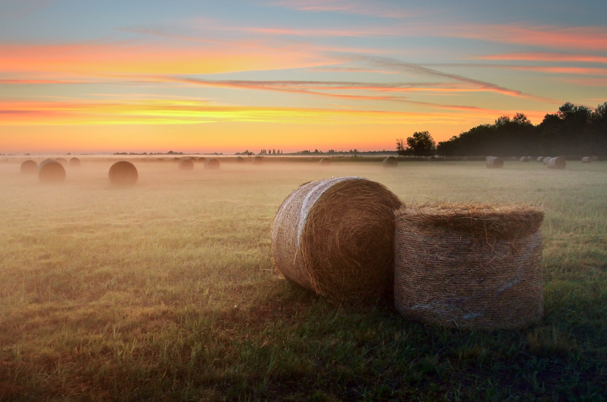 Photograph End of Summer by Peter Kováč on 500px