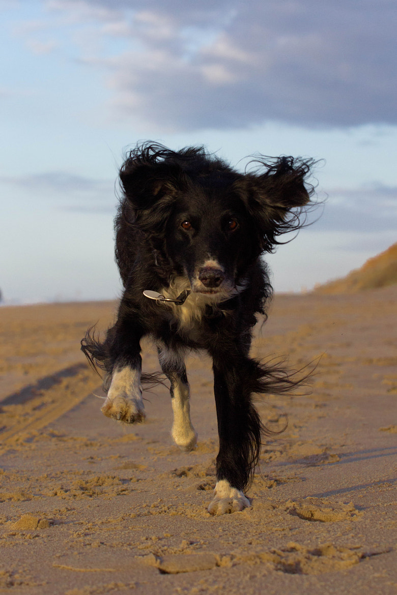Photograph Pelin Running dog by Heike Kitzig on 500px