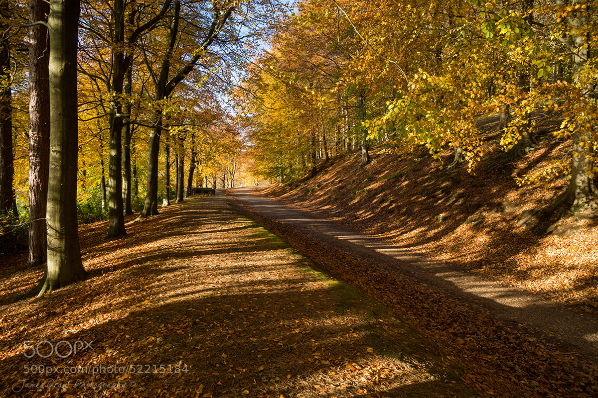 Photograph Avenue of Autumn by James Grant on 500px