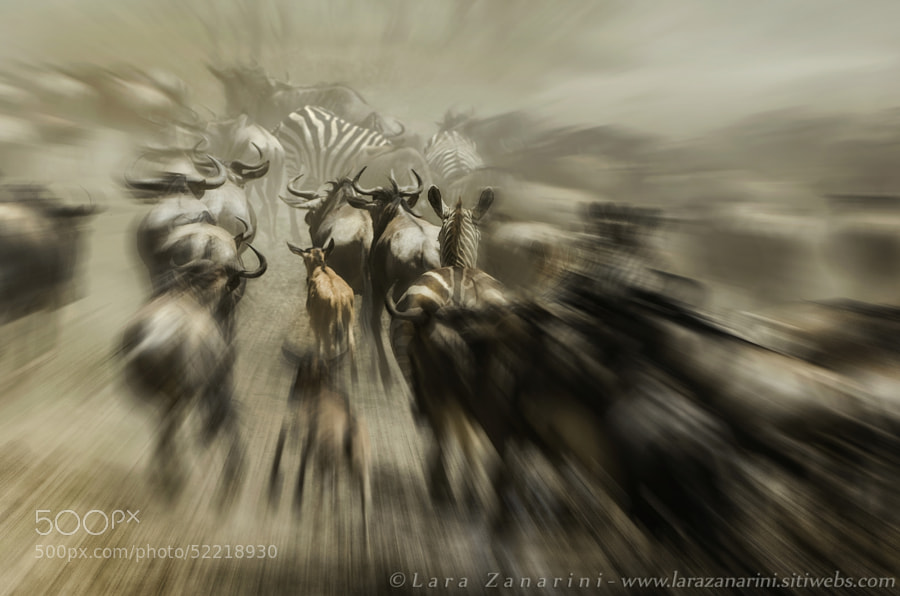 Photograph Panic in the migration by Lara Zanarini on 500px
