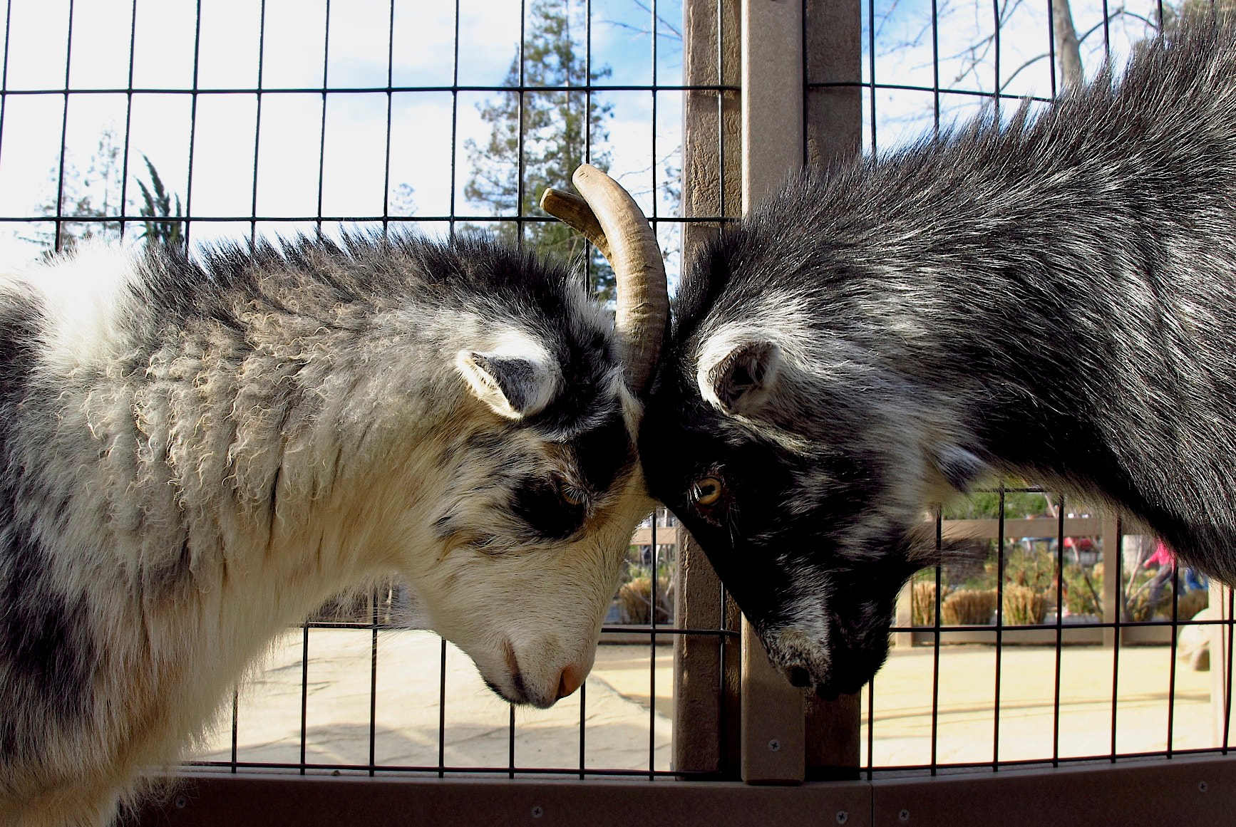 Photograph Petting Zoo by Leah Stohs on 500px