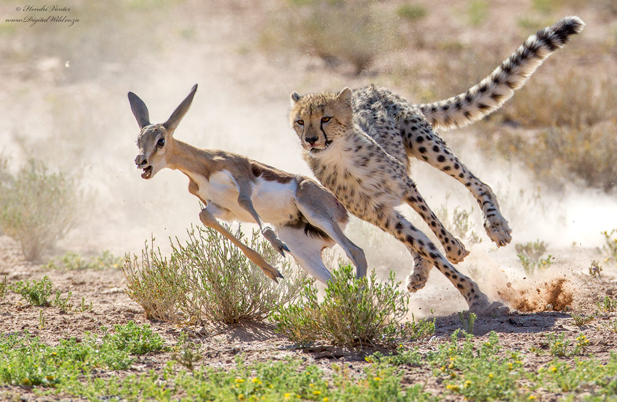 Photograph The Chase by Hendri Venter on 500px
