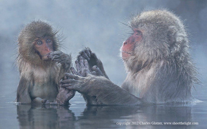 Photograph Snow monkey in hot spring by Charles Glatzer on 500px