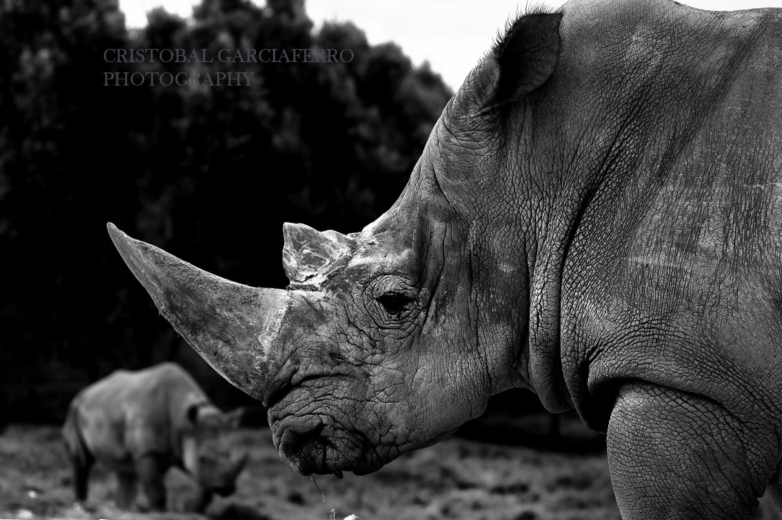 Photograph Rhino by Cristobal Garciaferro Rubio on 500px