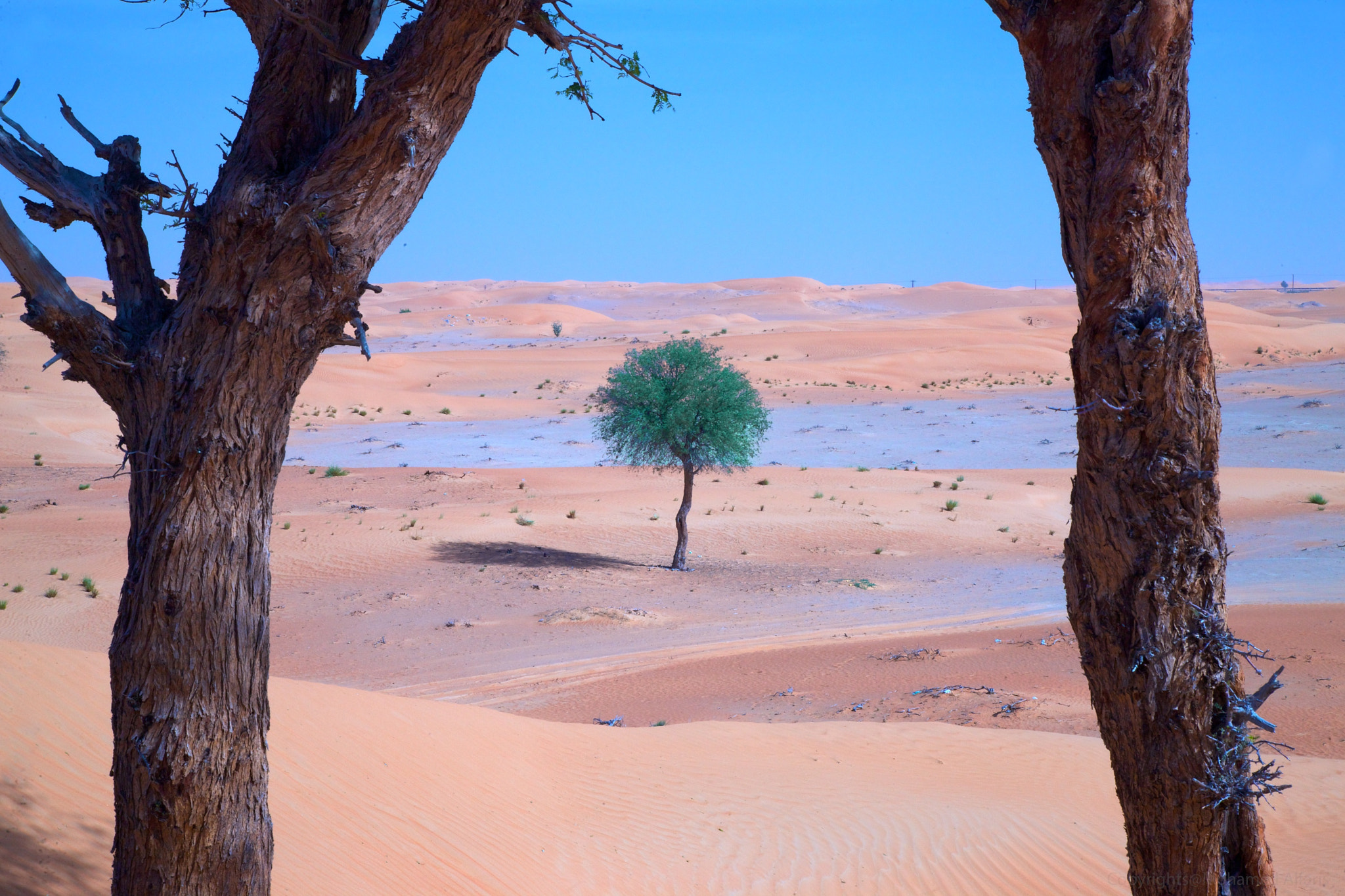 Photograph Alone in the Desert by Mohamed  Al Faris on 500px