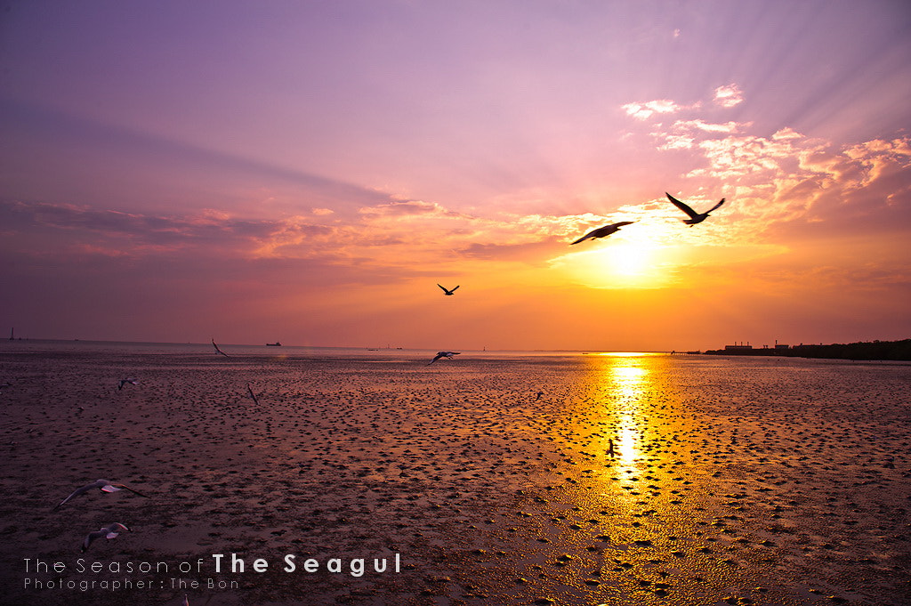 Photograph Seaguls in the evening. by JAKKRIT IMLIMTHAN on 500px