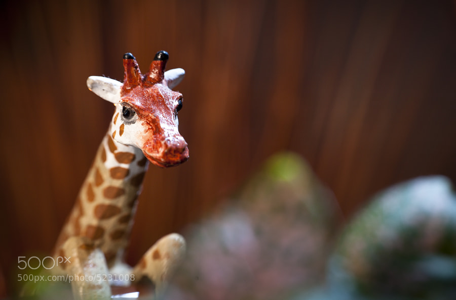 Giraffe Looking For the Camp Fire by Jay Scott (jayscottphotography) on 500px.com