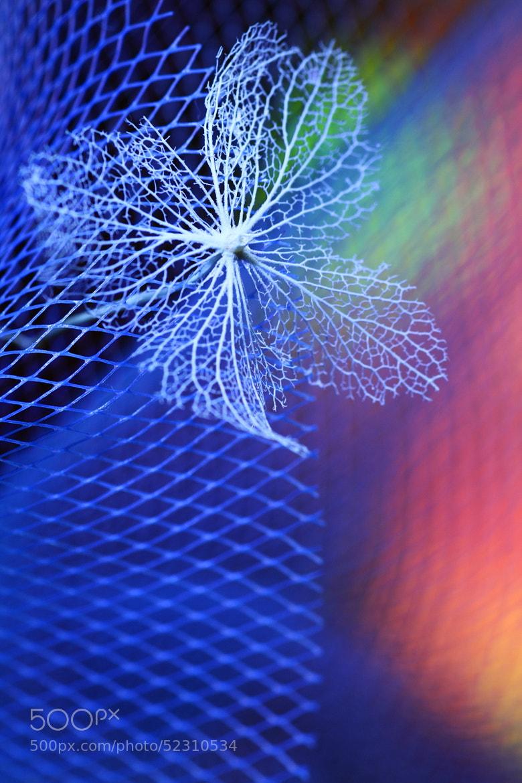 Photograph Blue trap by Shihya Kowatari on 500px