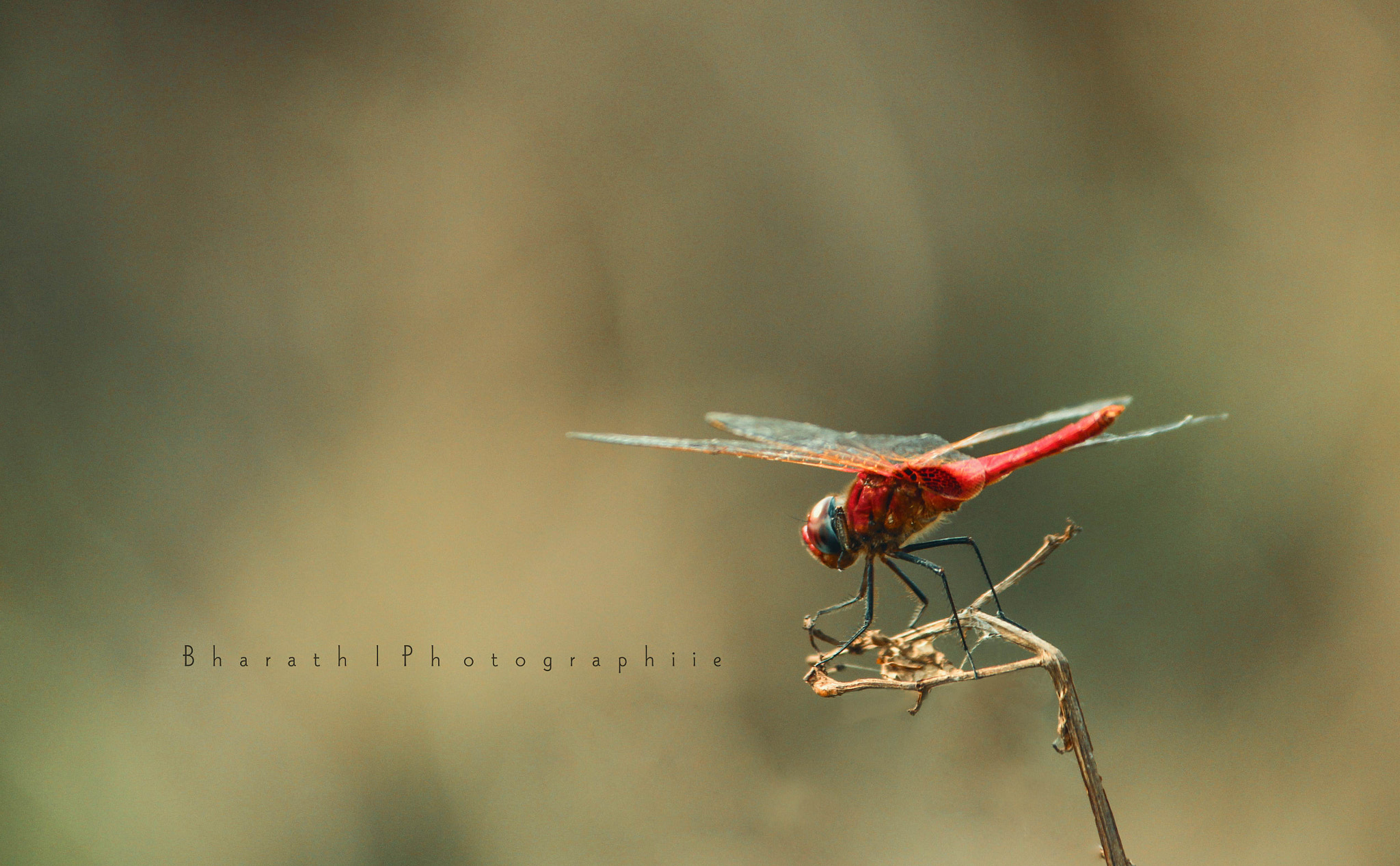 Photograph Dragon Fly by Bharath Vyas on 500px