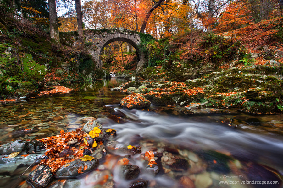 Tollymore Evening by Stephen Emerson on 500px.com