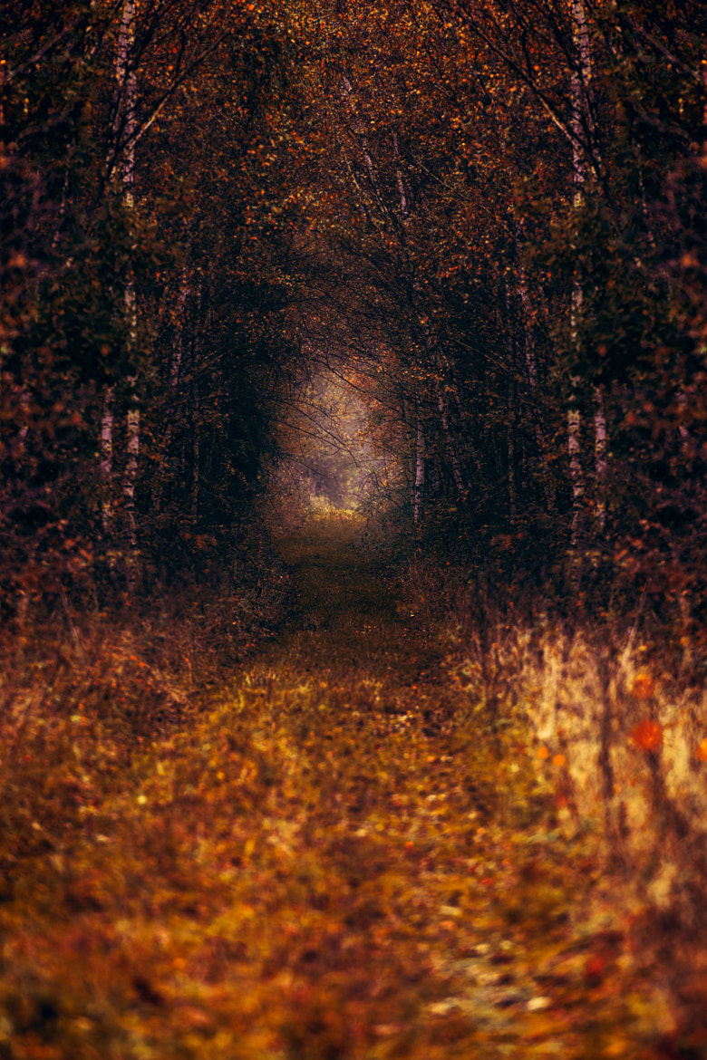 Photograph Natural Tunnel by Denis  on 500px