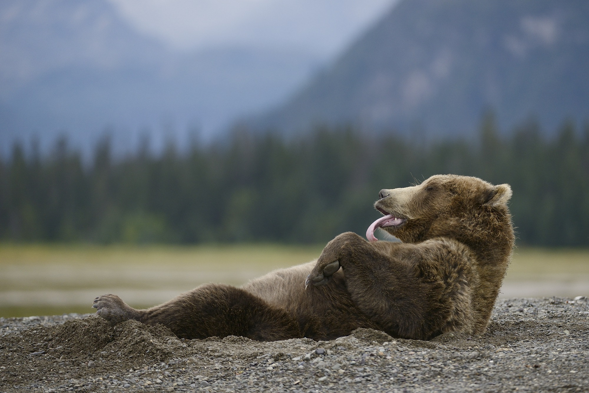 Photograph The Bear Tongue by Olav  Thokle on 500px