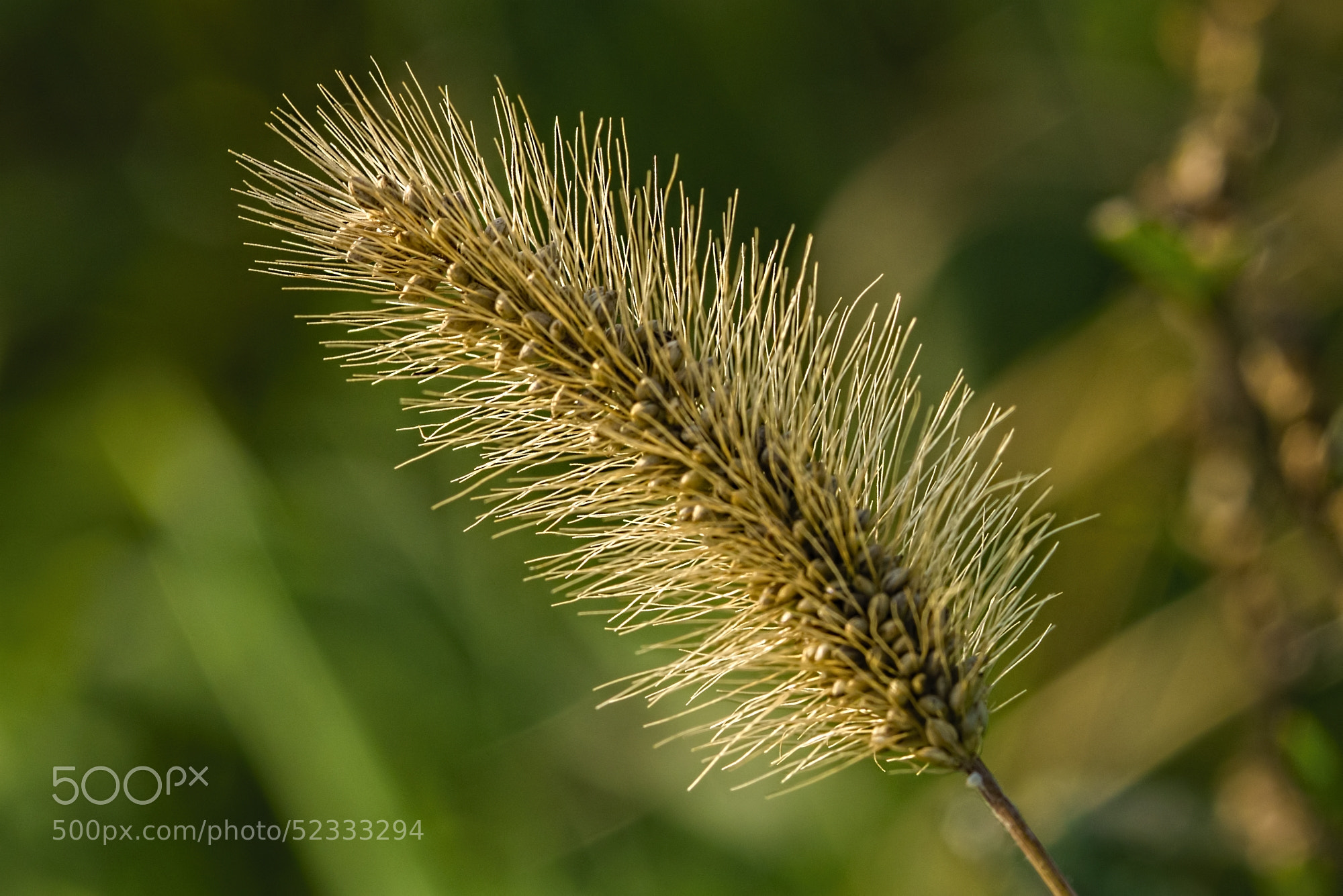 Photograph Grass by K. Beck on 500px