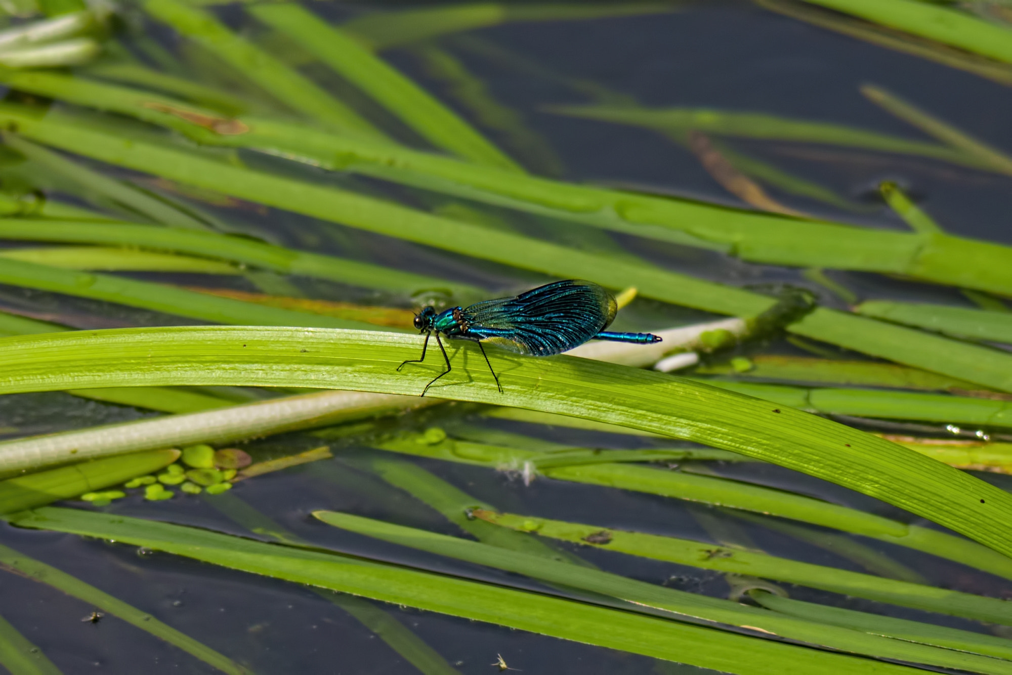 Photograph Dragonfly by K. Beck on 500px
