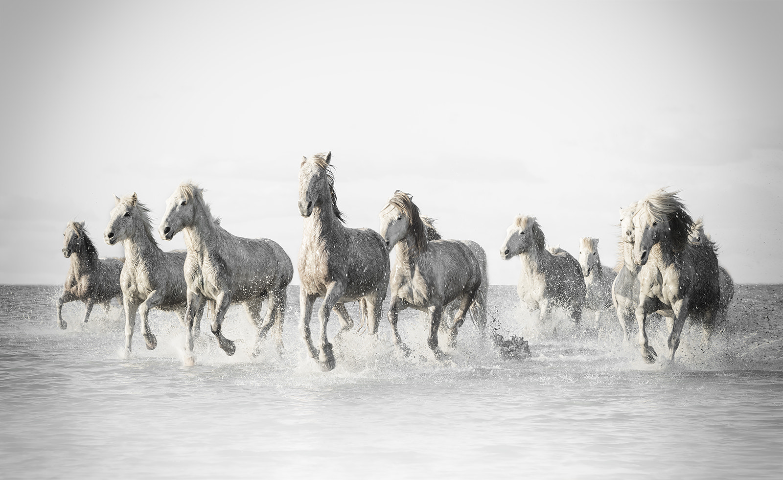 Photograph White Horses by Marco Carmassi on 500px
