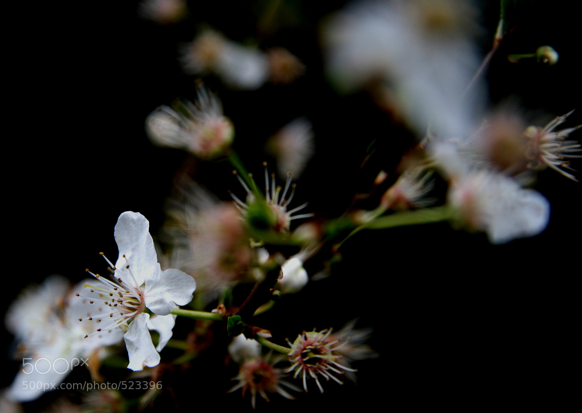 Photograph Flower by Arthur OBEDIA on 500px