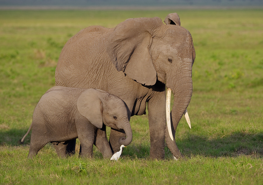 Photograph Elephant and Baby by Dean Tatooles on 500px
