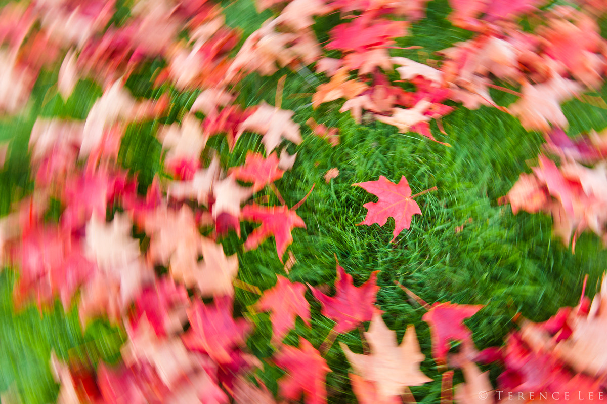 Photograph The (re)Turn of Fall! by Terence Leezy on 500px