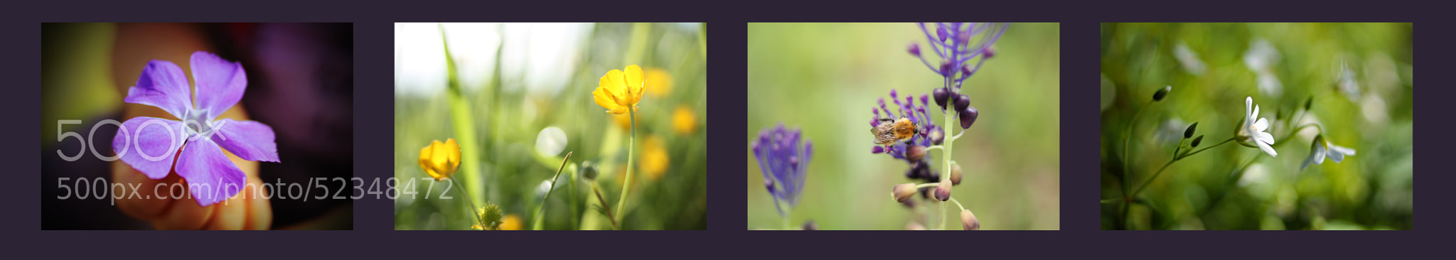 Photograph Wildflower Collection by Emma Erasmus on 500px