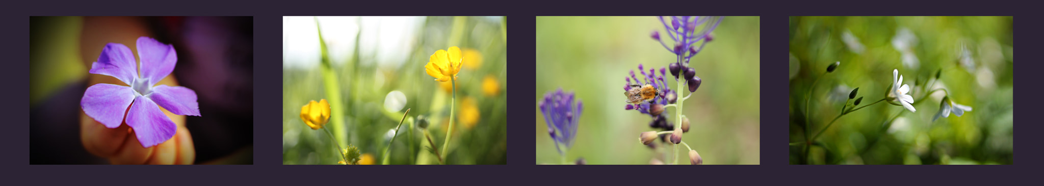 Photograph Wildflower Collection by ePhotographicandesign on 500px